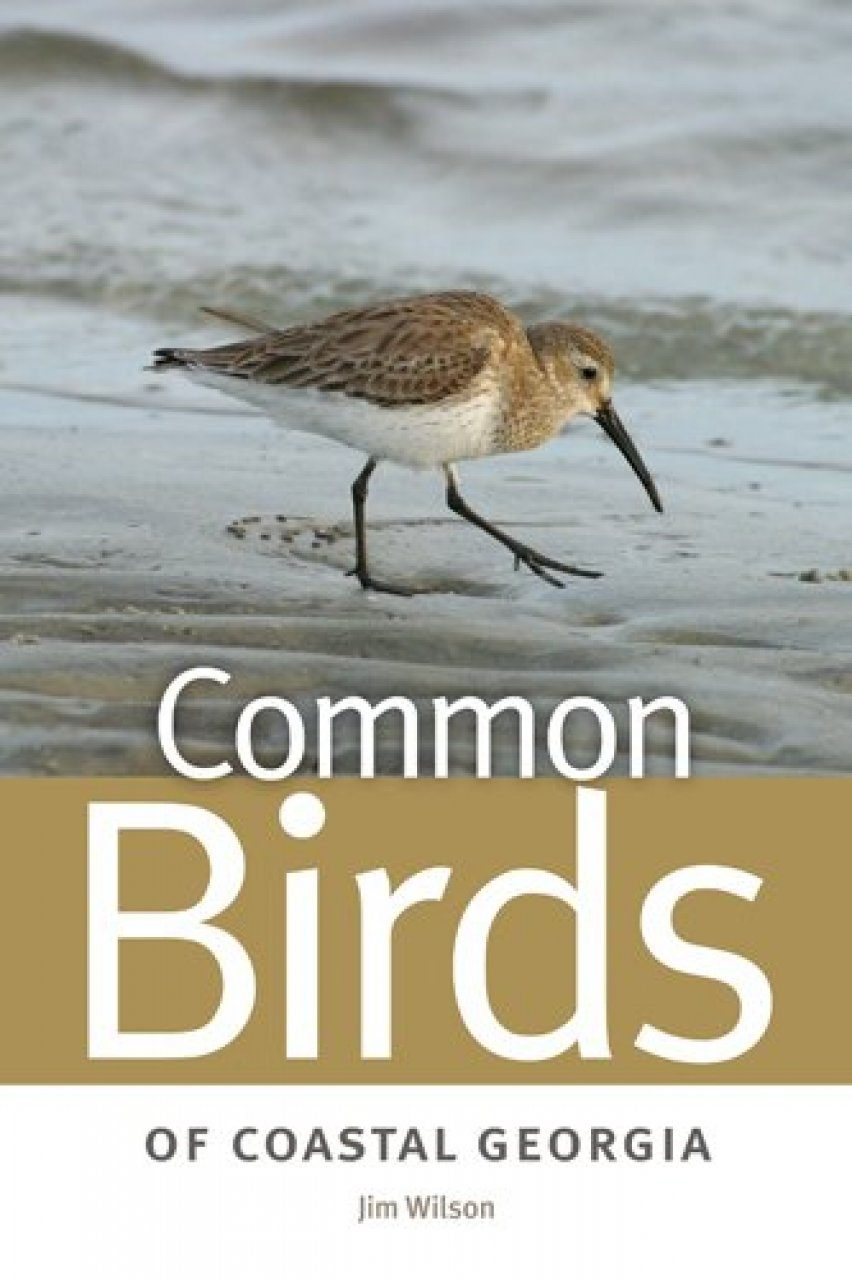 Common Birds of Coastal Georgia