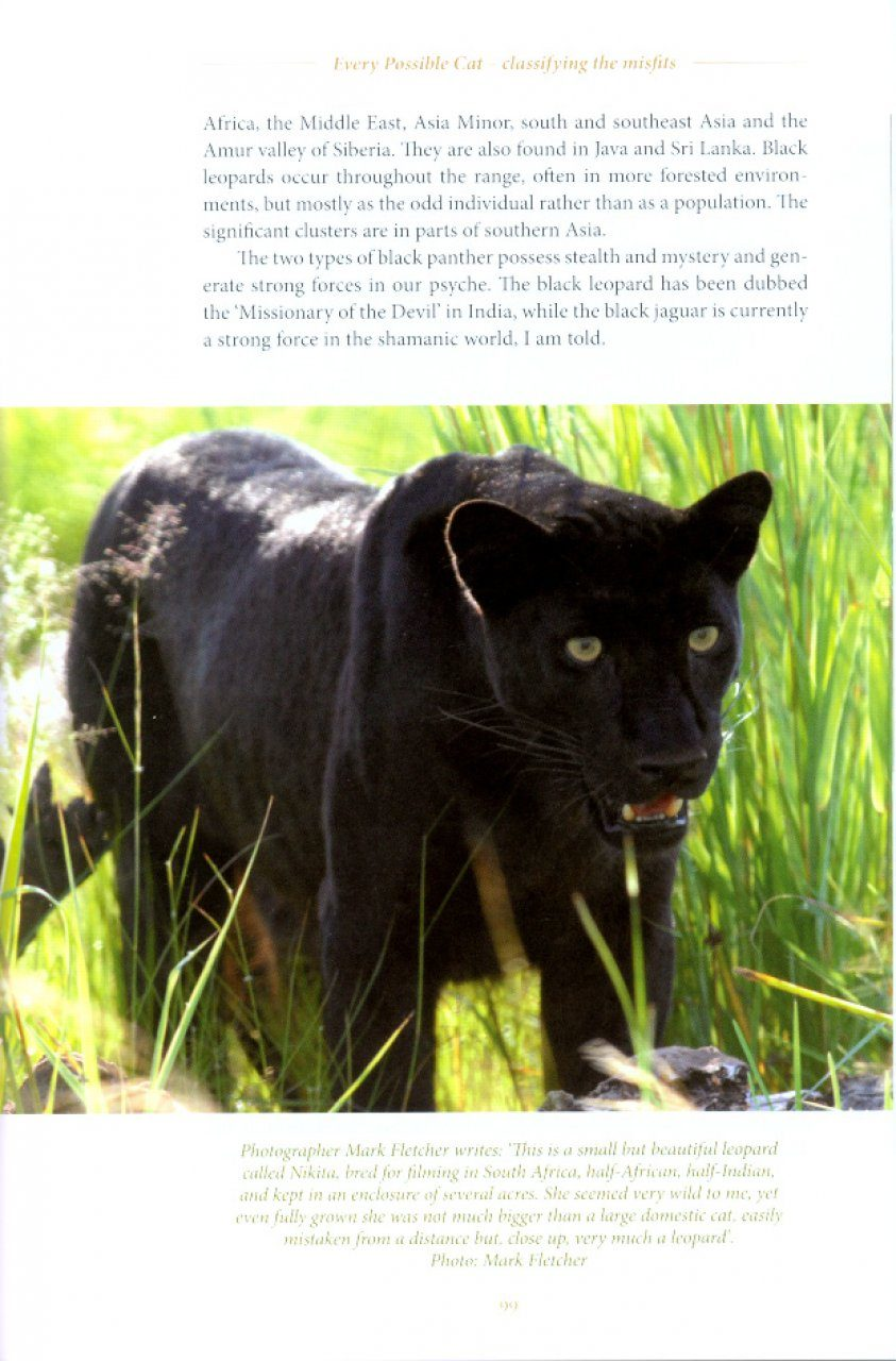 Big Cats Facing Britain S Wild Predators Nhbs Academic