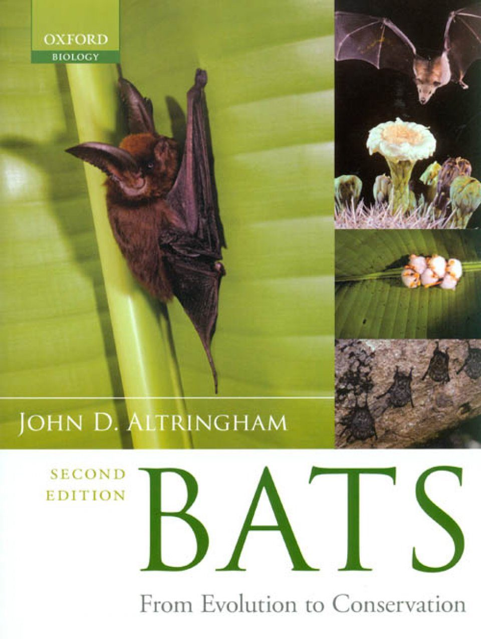bats  from evolution to conservation