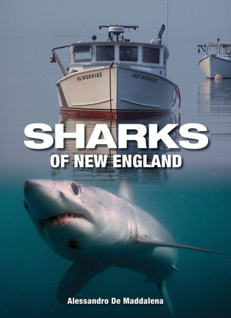 Sharks of New England