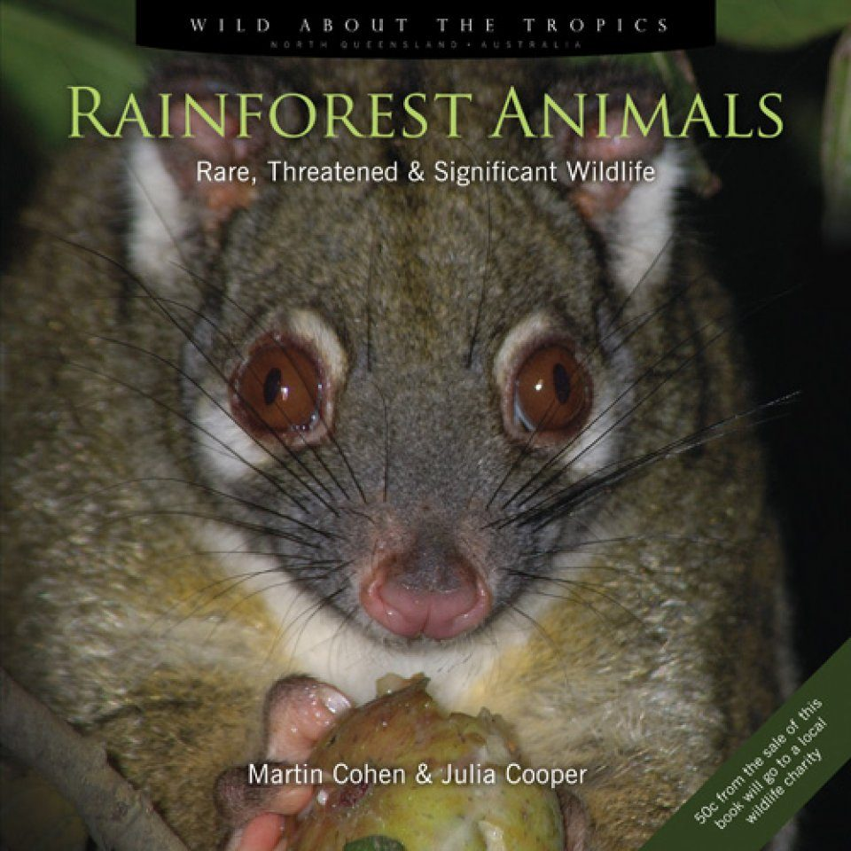 Rainforest Animals