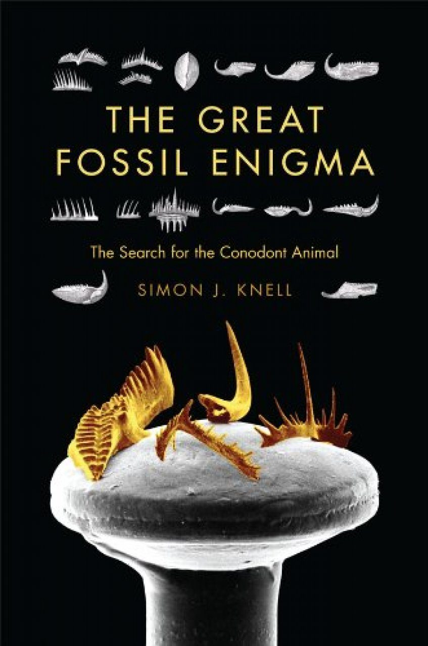 The Great Fossil Enigma