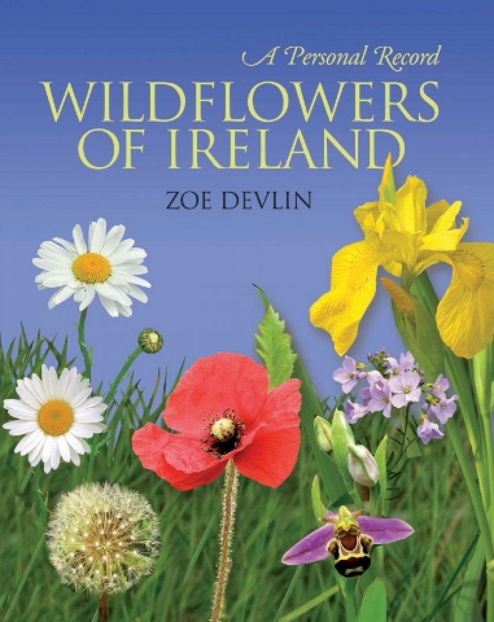 Wildflowers of Ireland