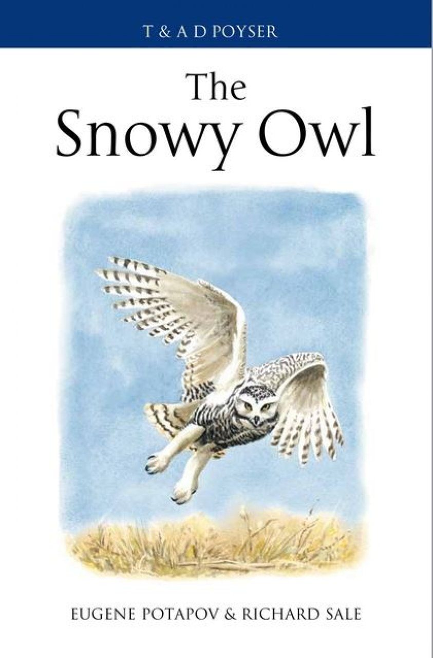 The Snowy Owl