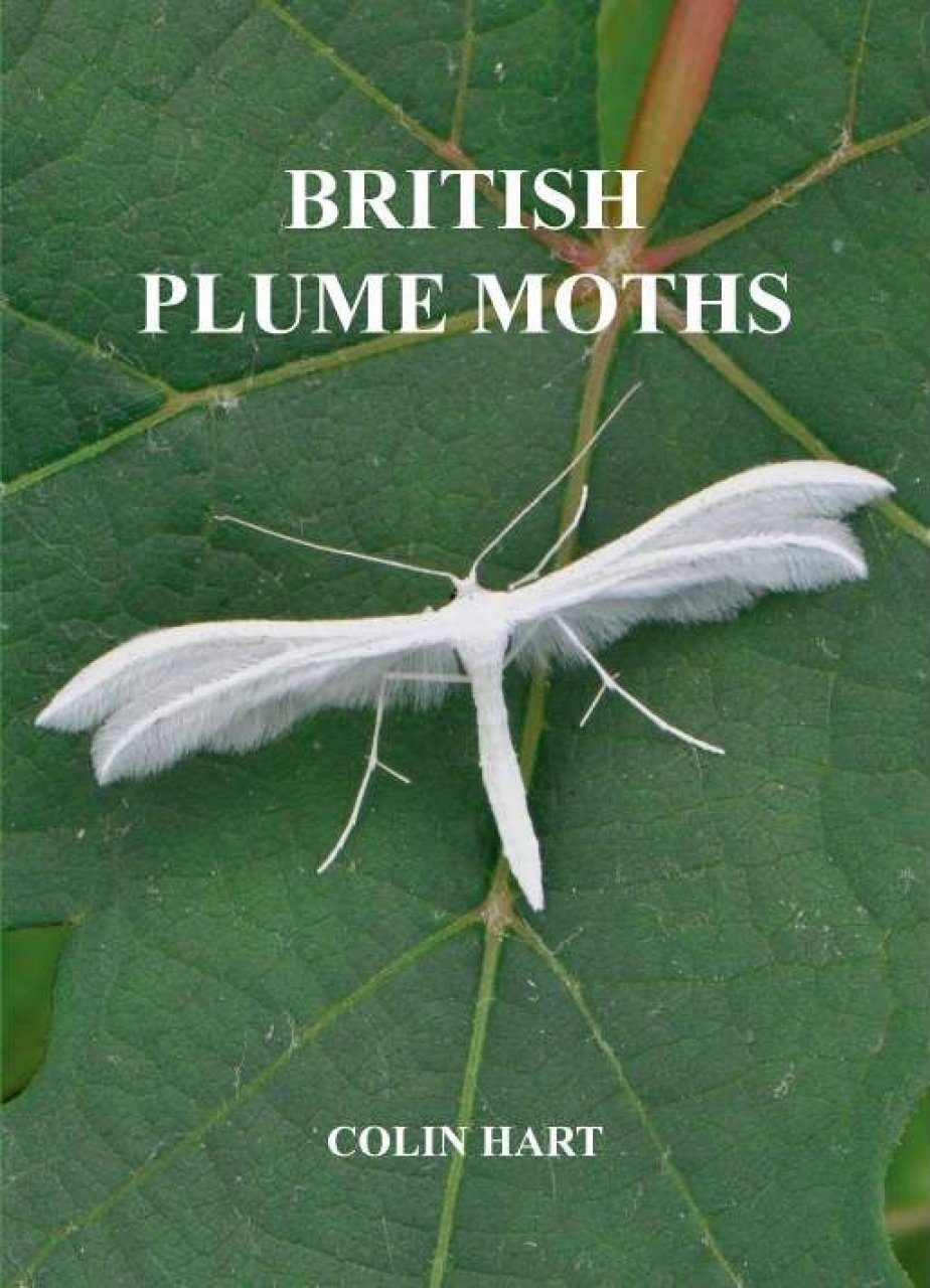 British Plume Moths