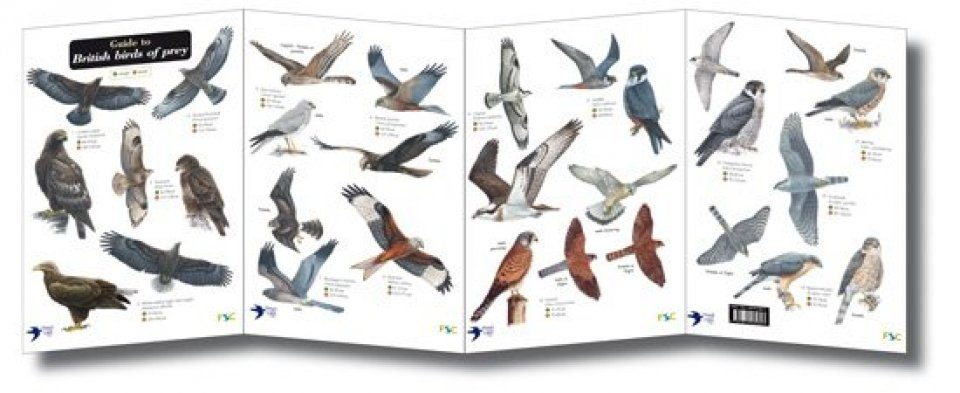 Guide To British Birds Of Prey Nhbs Field Guides Natural History