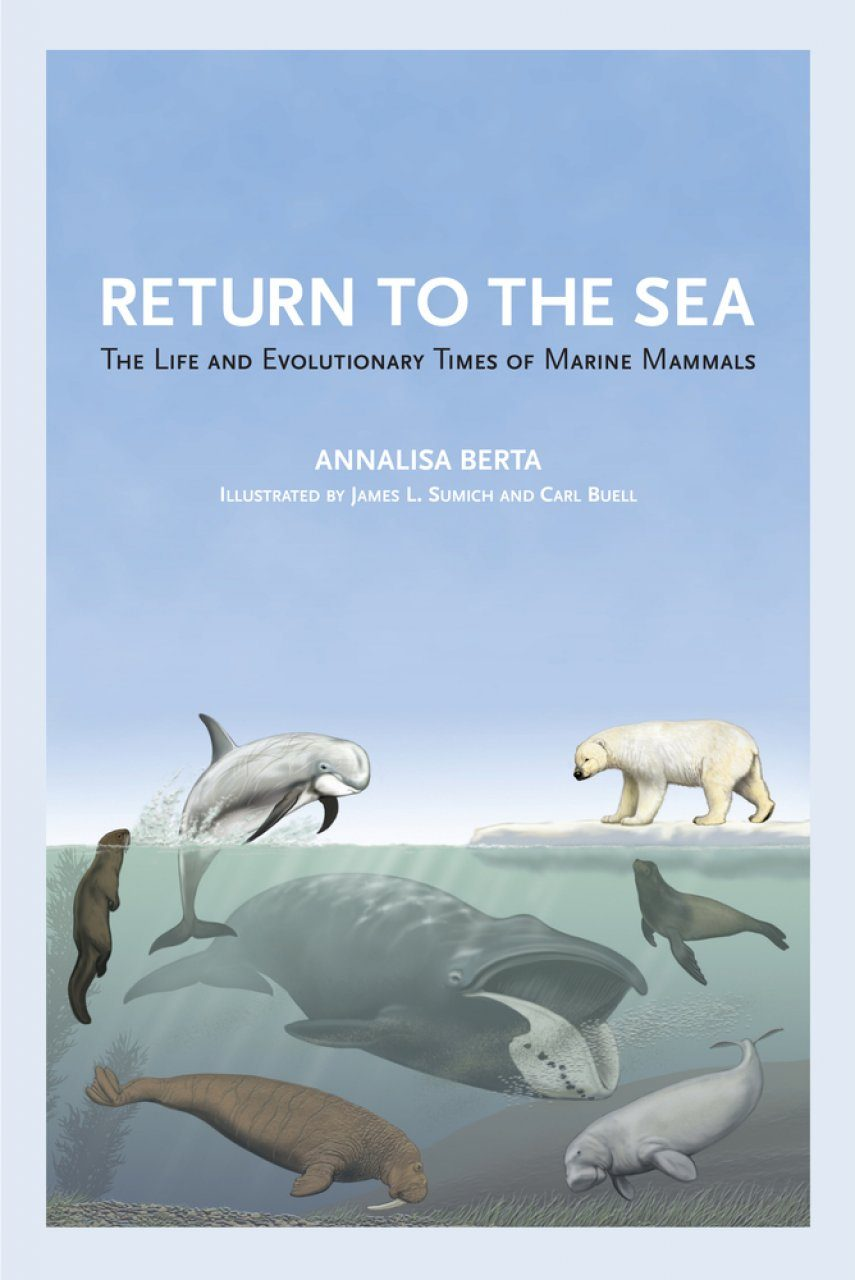 Return To The Sea The Life And Evolutionary Times Of Marine Mammals