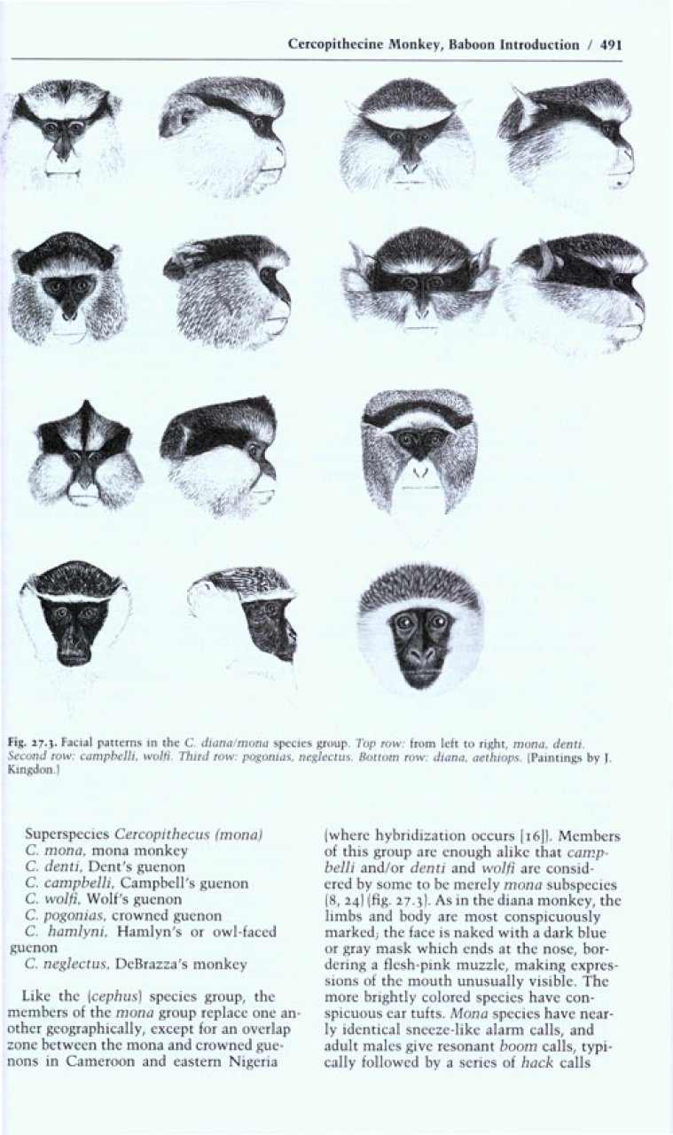 Primates Carnivores The Behavior Guide to African Mammals: Including Hoofed Mammals 20th Anniversary Edition