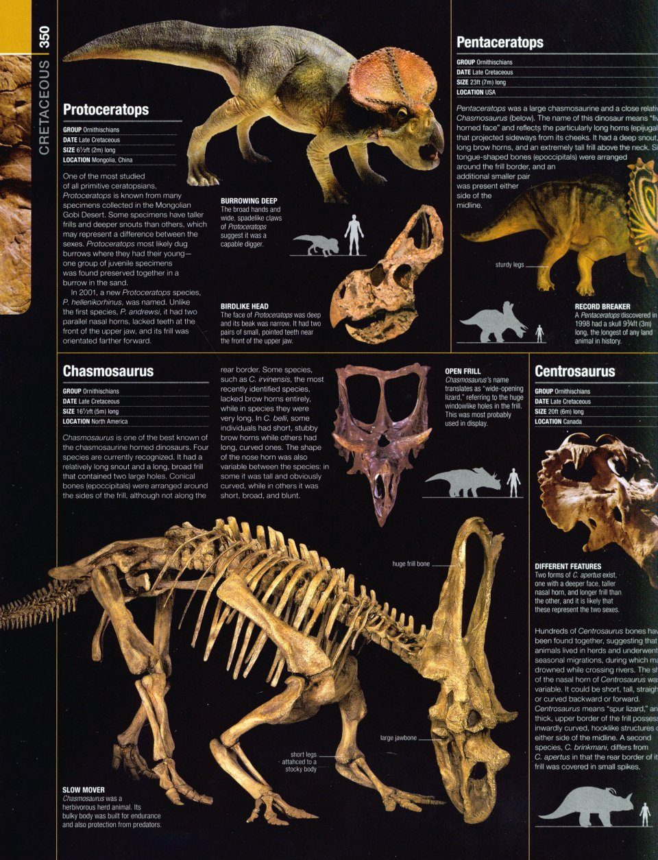 prehistoric life  the definitive visual history of life on