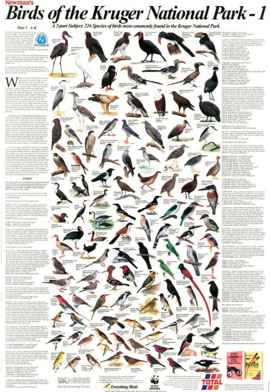 Newman's Birds of the Kruger National Park, 1: A-K - Poster