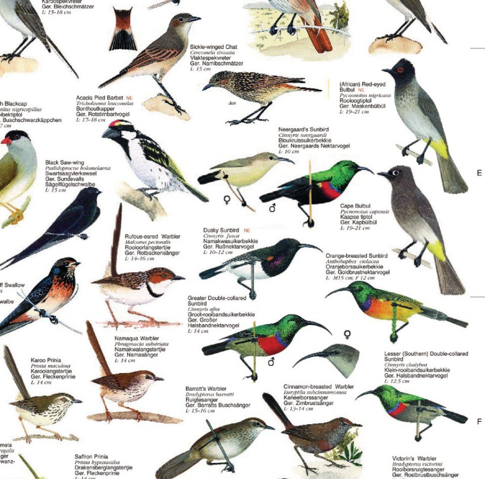 south african birds guide pdf