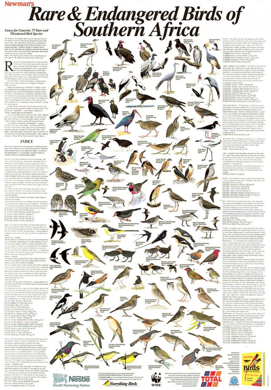 Newman's Rare and Endangered Birds of Southern Africa - Poster