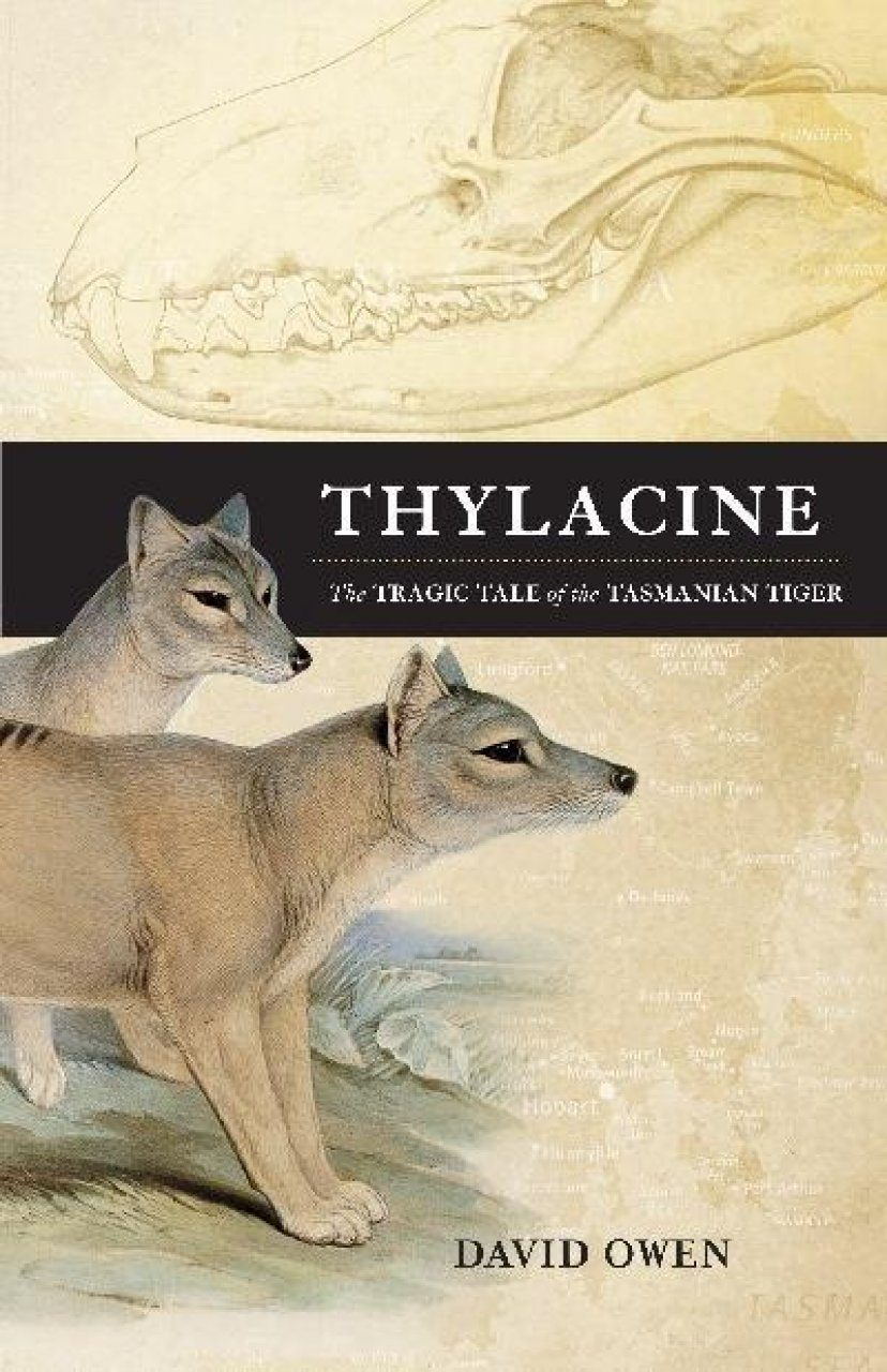 Thylacine: The Tragic Tale of the Tasmanian Tiger