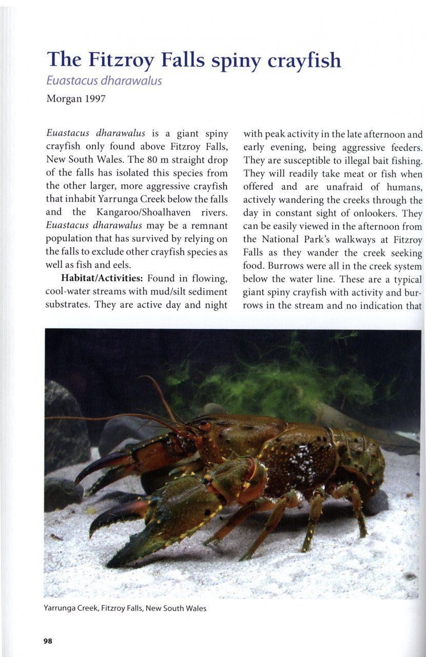 A Guide to Australia\'s Spiny Freshwater Crayfish: Robert B McCormack ...