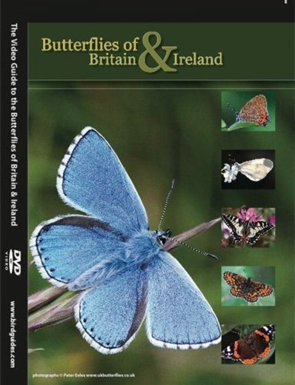 The Video Guide to the Butterflies of Britain and Ireland (Region 2)