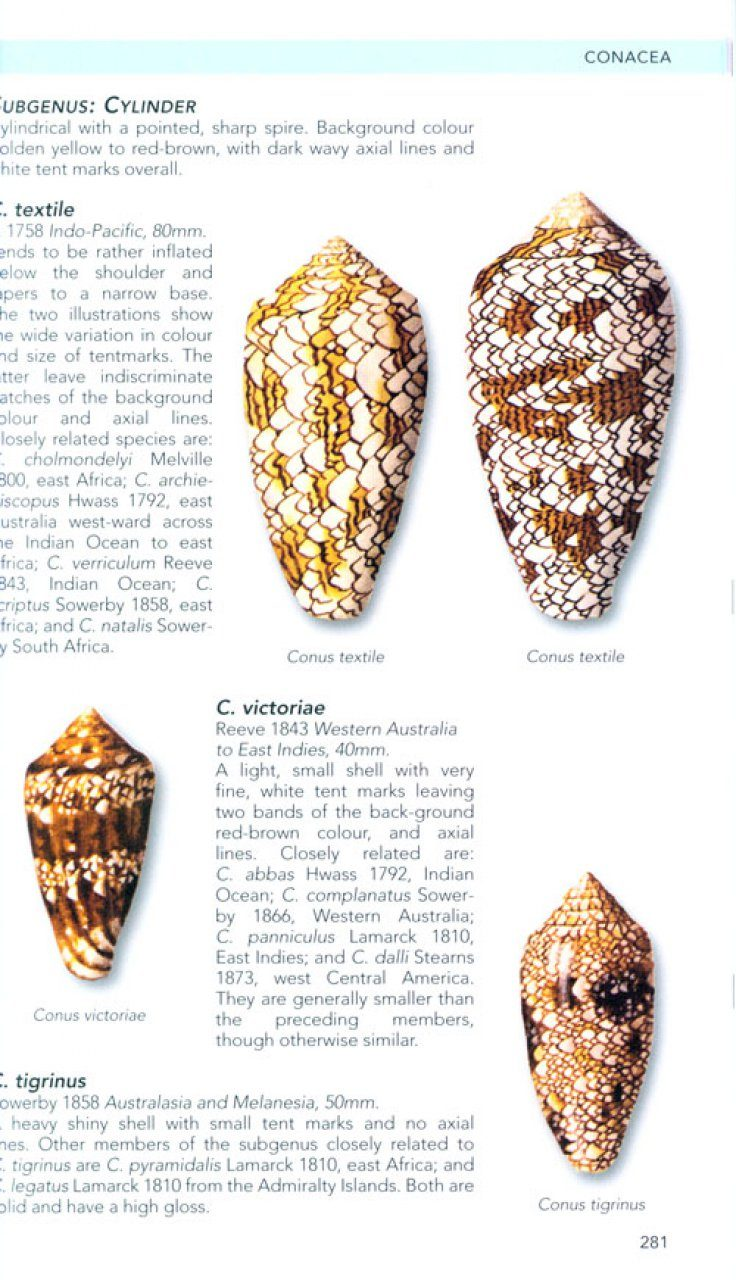Philip S Guide To Seashells Of The World Aph Oliver