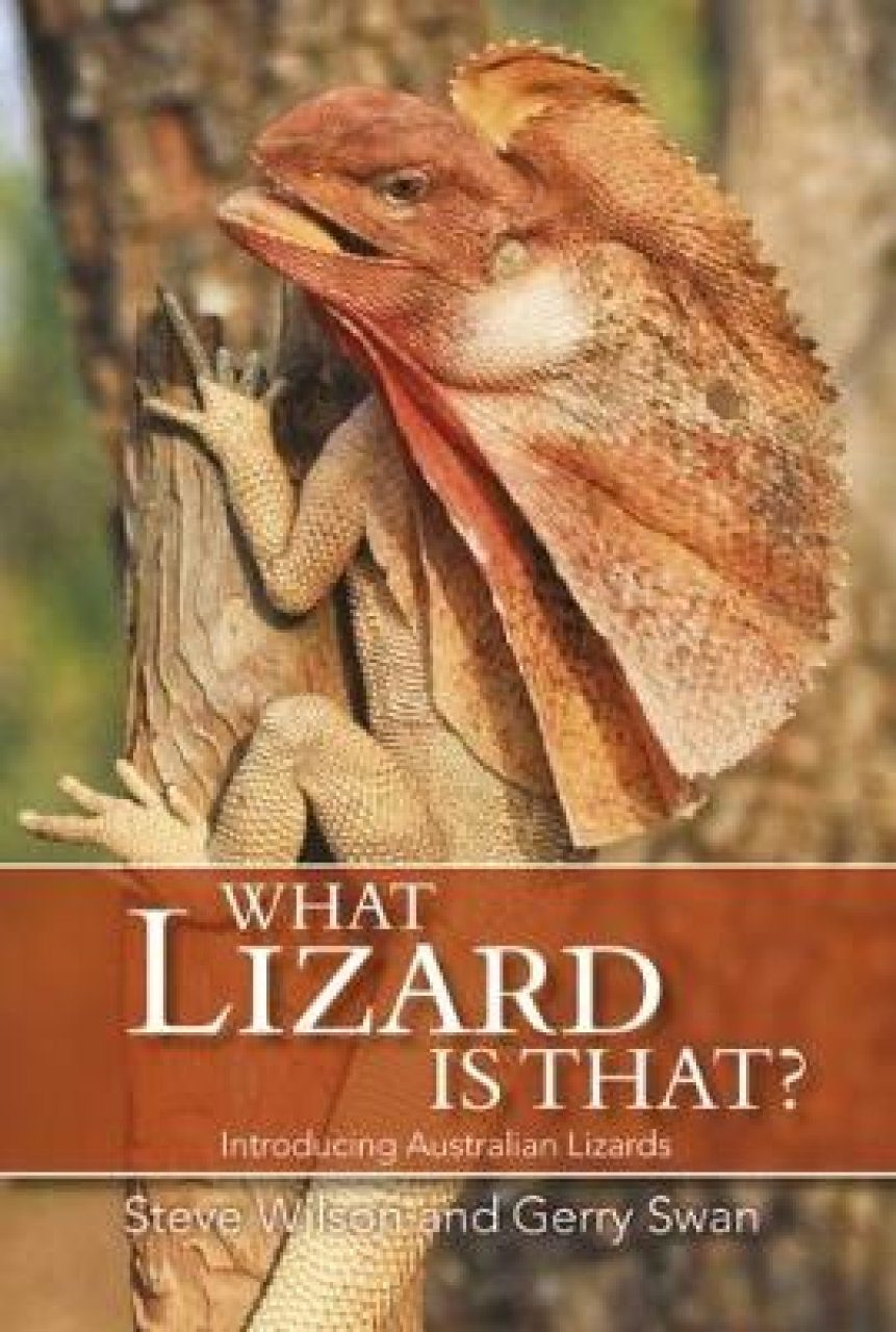 What Lizard Is That?