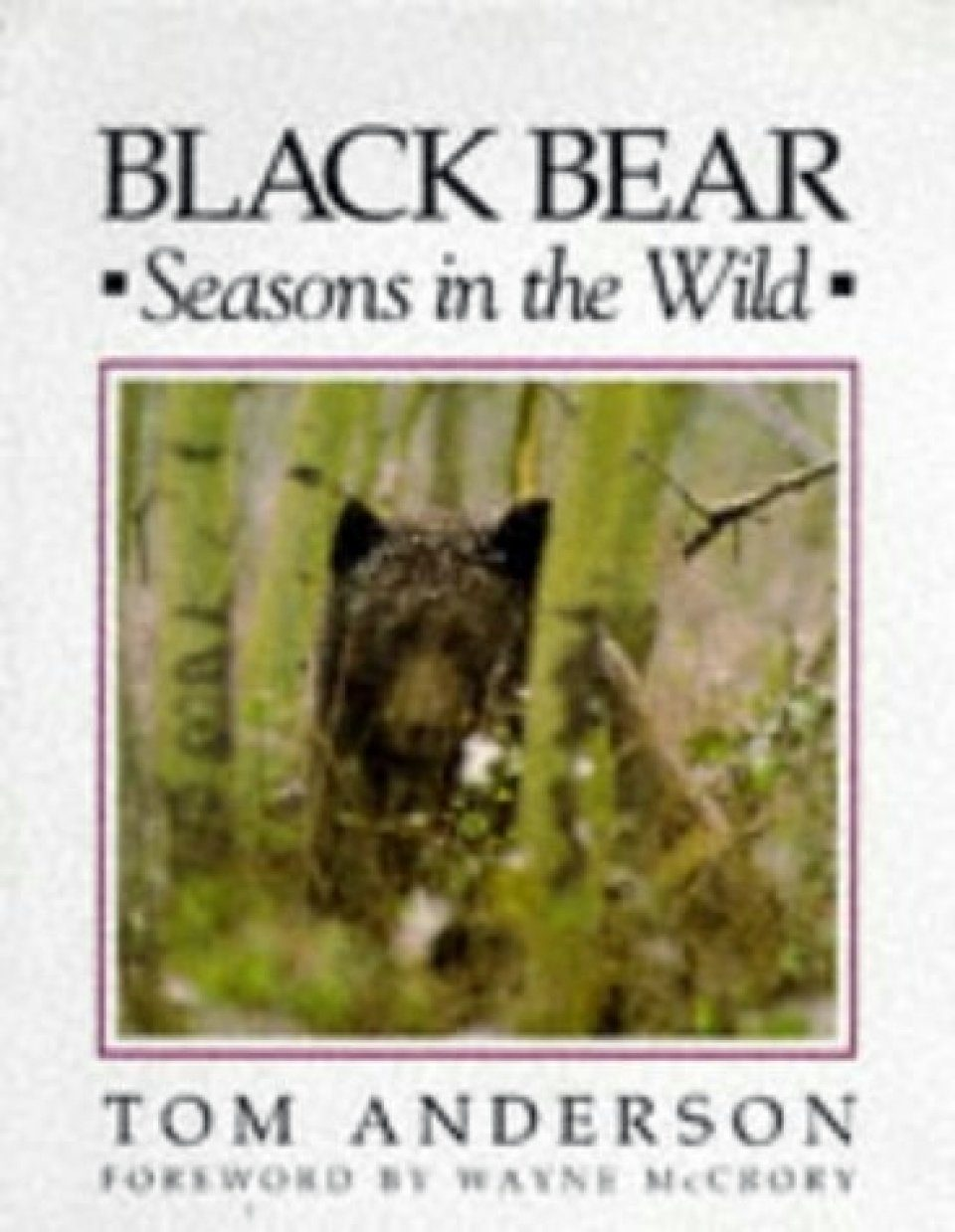 Black Bear: Seasons in the Wild