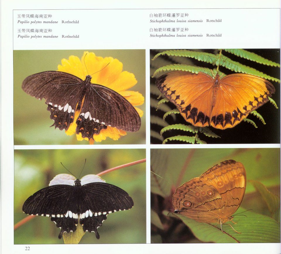Butterflies Of Yunnan, China: Flowers That Can Fly