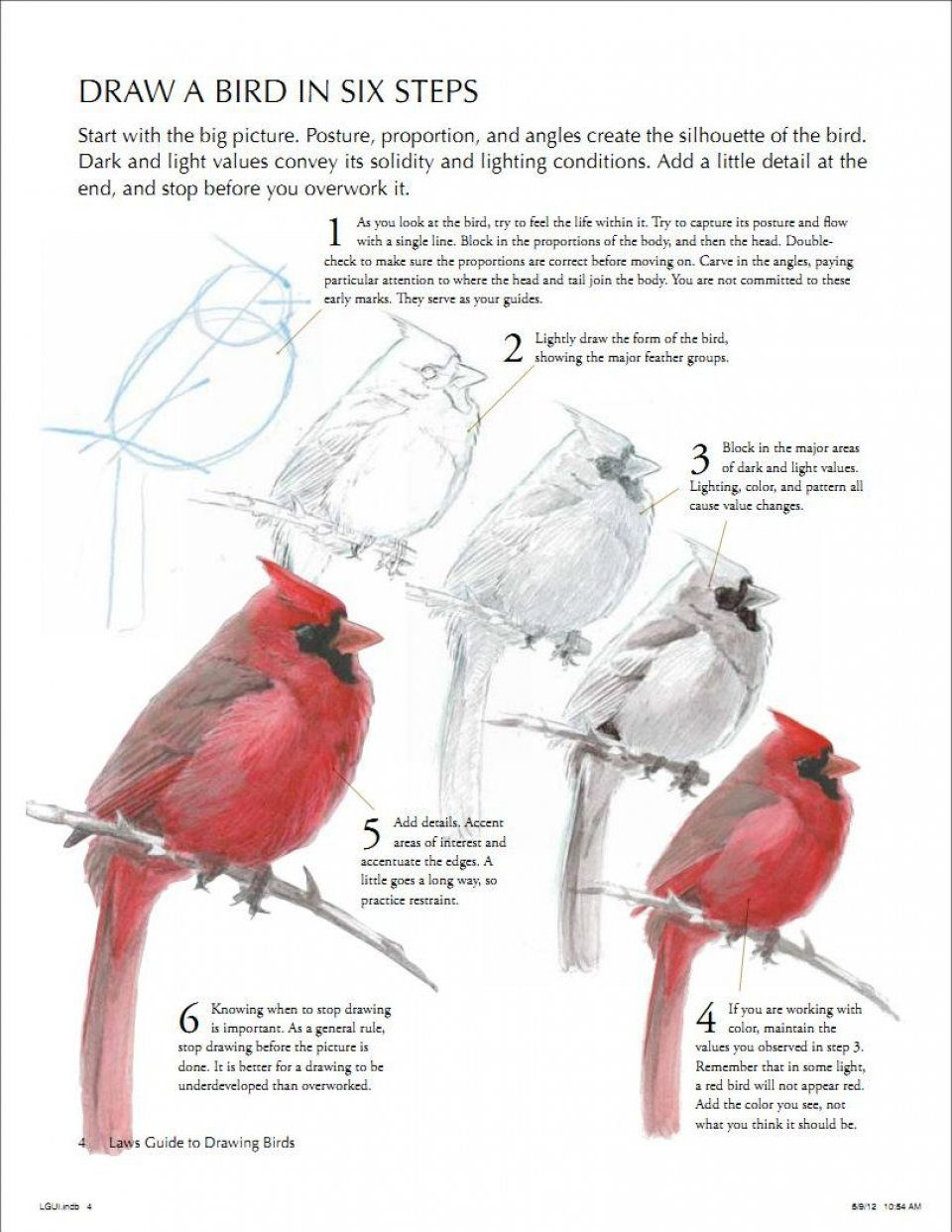 the laws guide to drawing birds john muir laws david allen