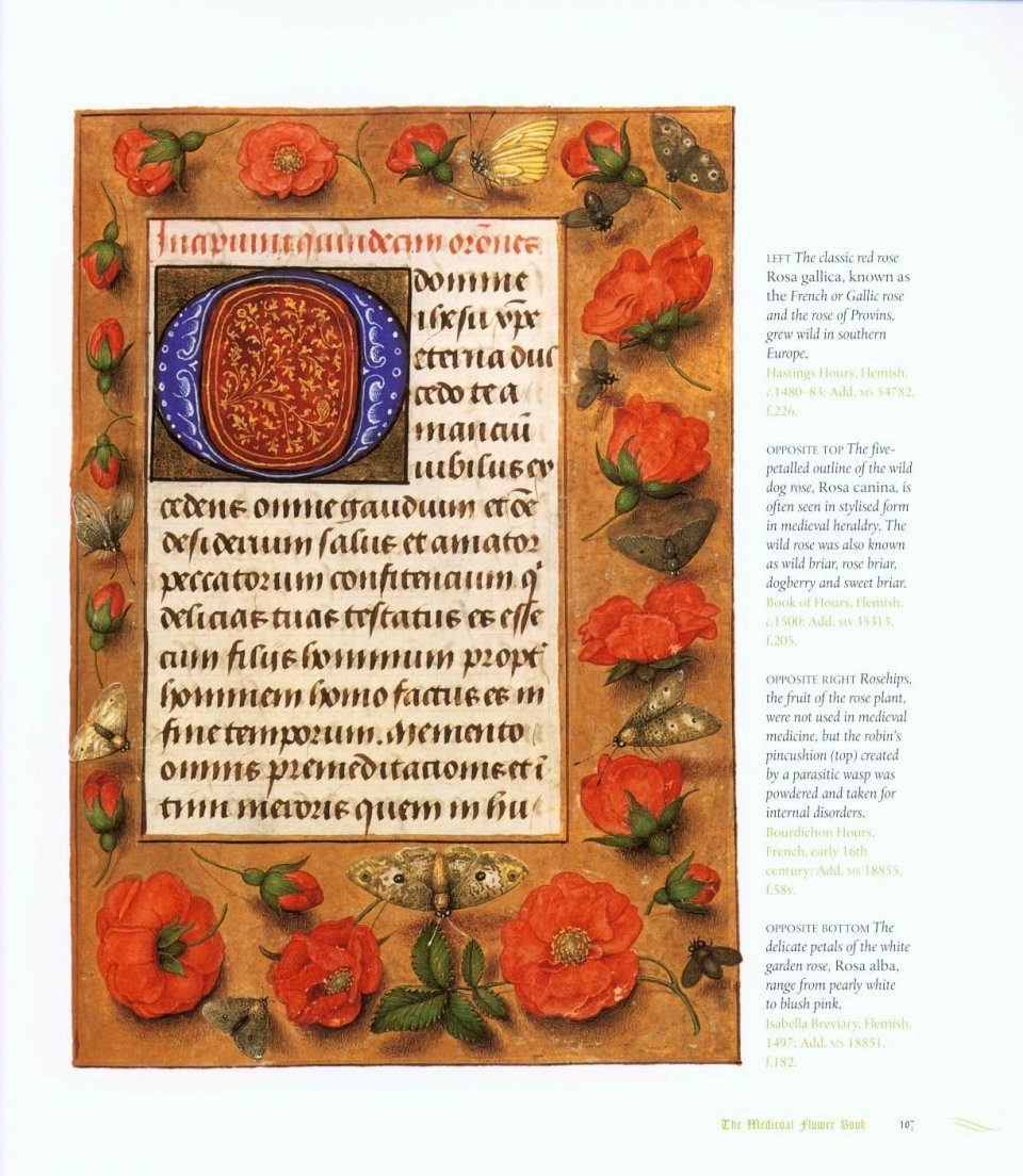 ... The Medieval Flower Book