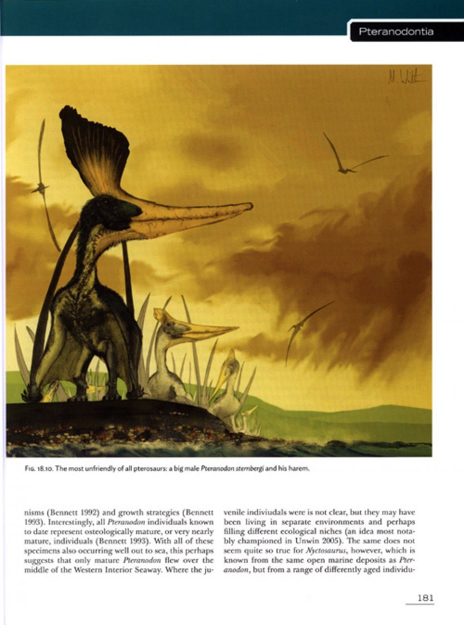 Pterosaurs: Natural History, Evolution, Anatomy: Mark P Witton ...