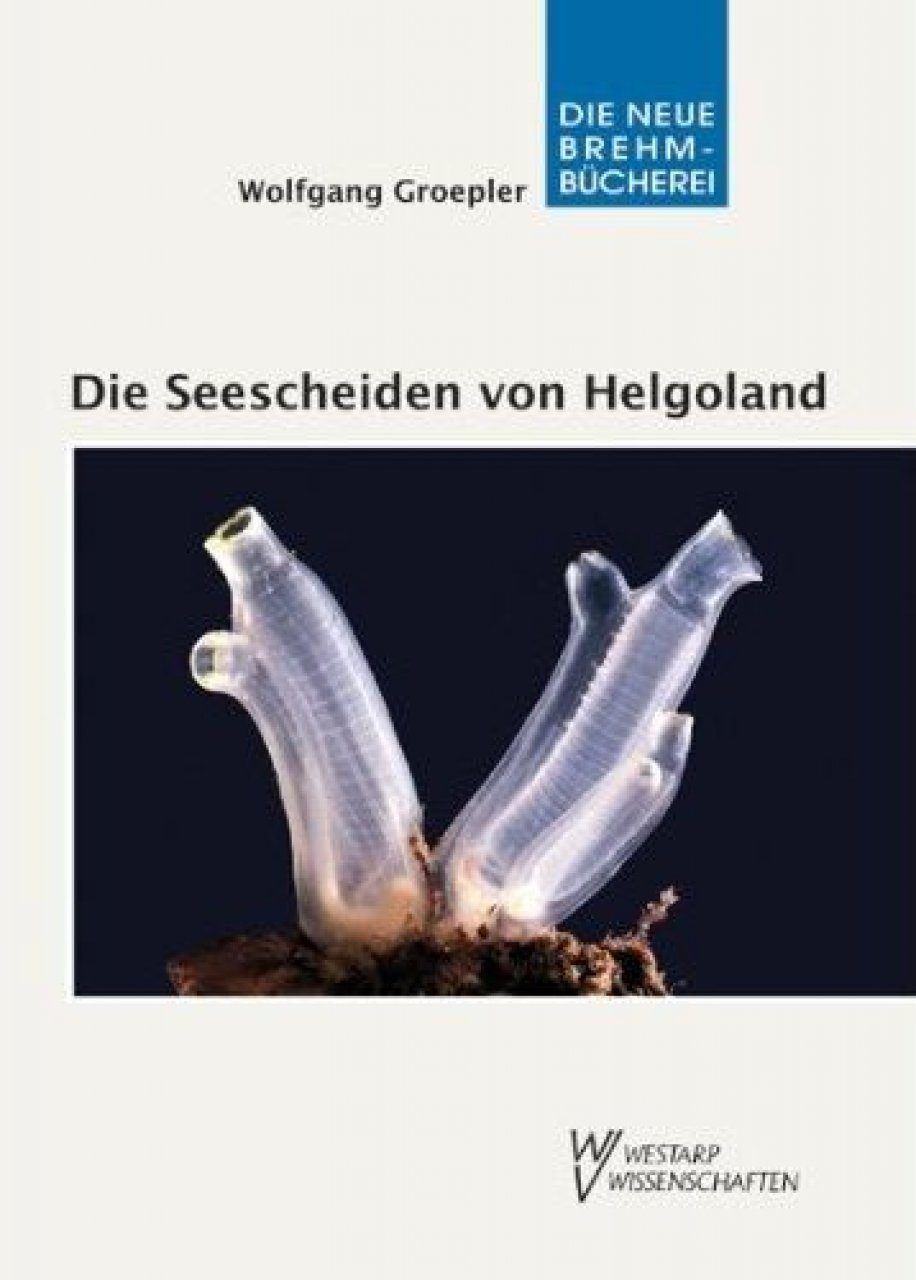 Die Seescheiden von Helgoland: Biologie und Bestimmung der Ascidien [ The Sea Squirts of Helgoland: Biology and Determination of Ascidians]