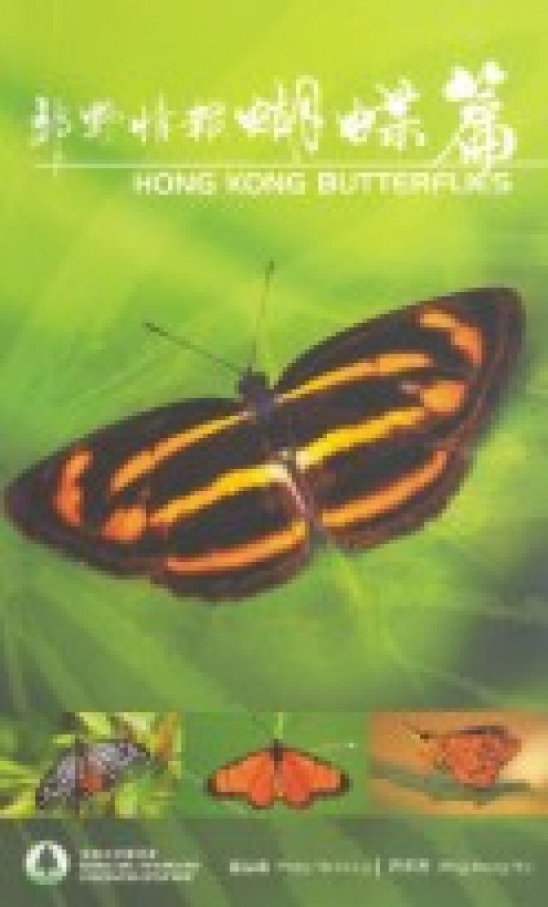 Hong Kong Butterflies