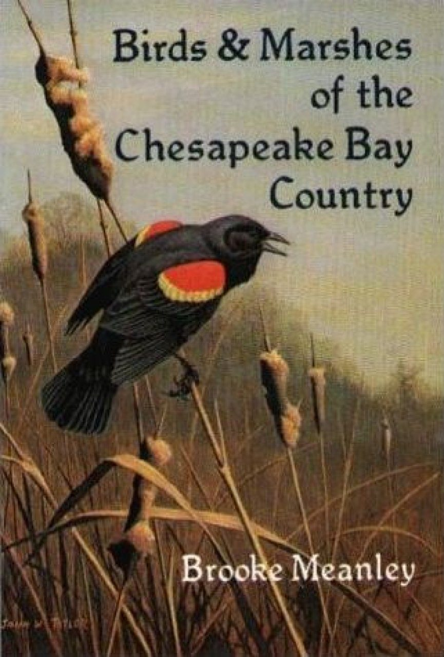 Birds and Marshes of the Chesapeake Bay Country