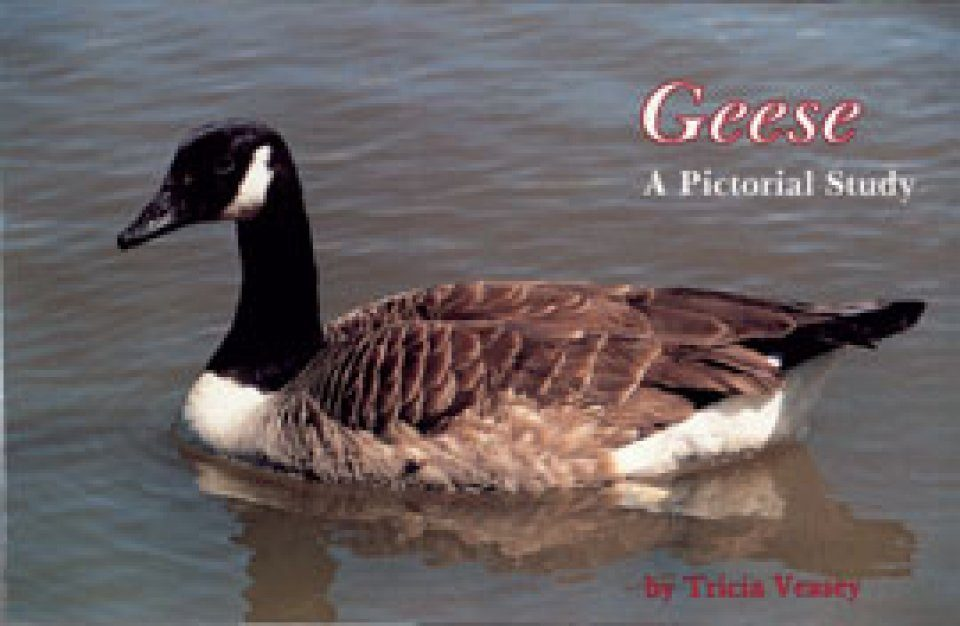 Geese: A Pictorial Study