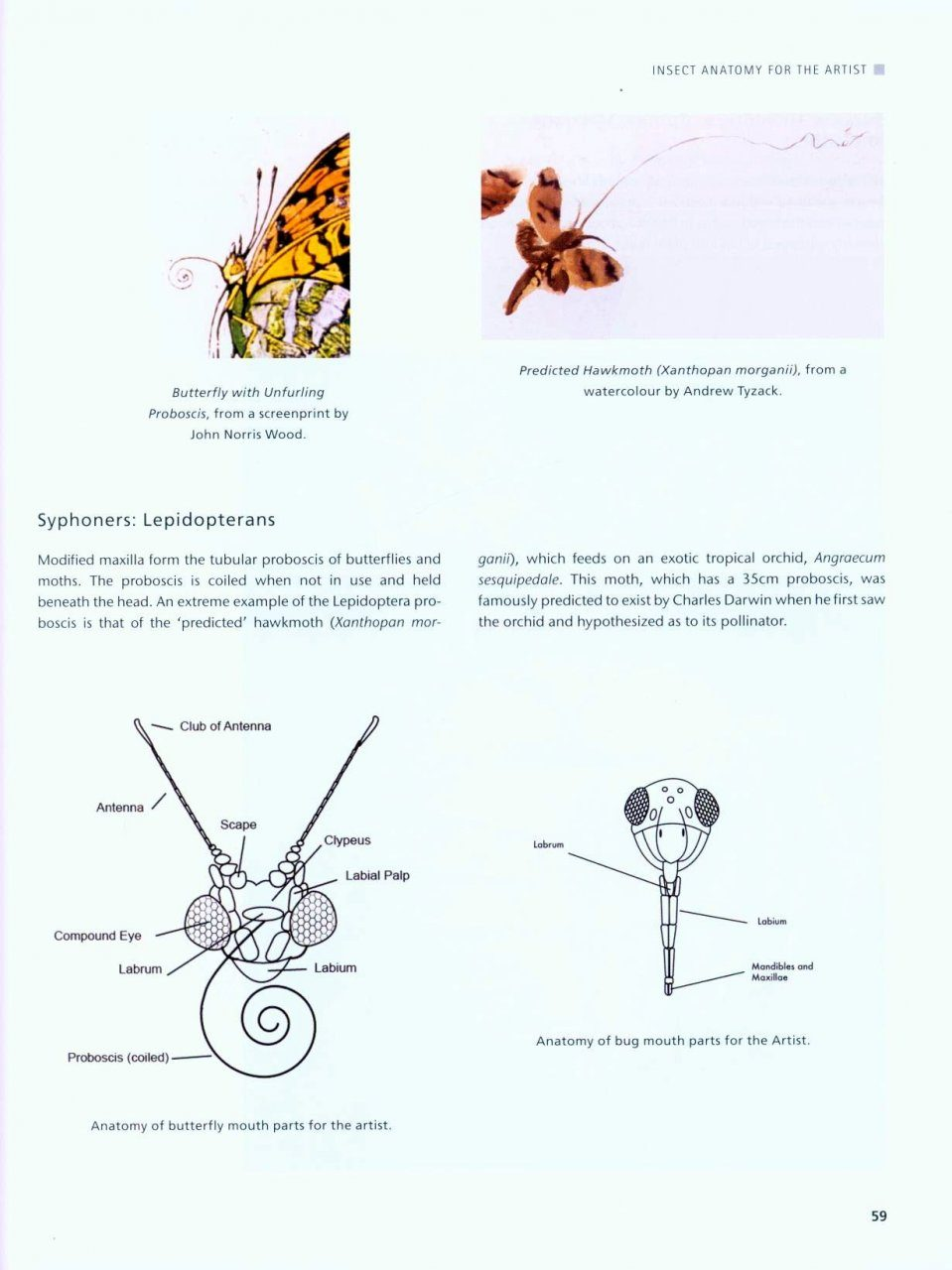 Drawing And Painting Insects Andrew Tyzack Katrina Van Grouw