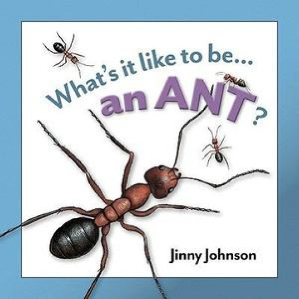 What's It Like To Be An Ant