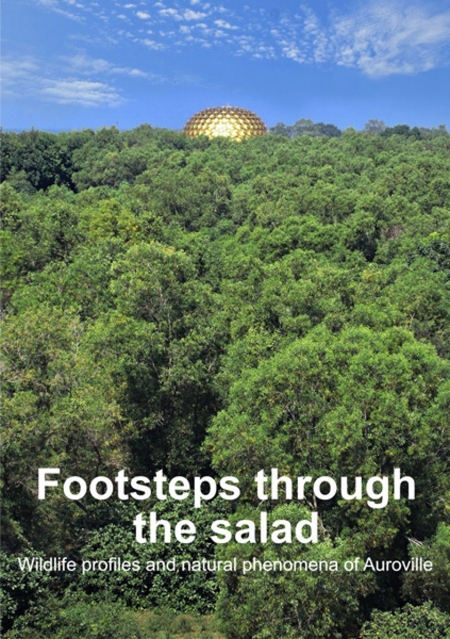 Footsteps Through the Salad