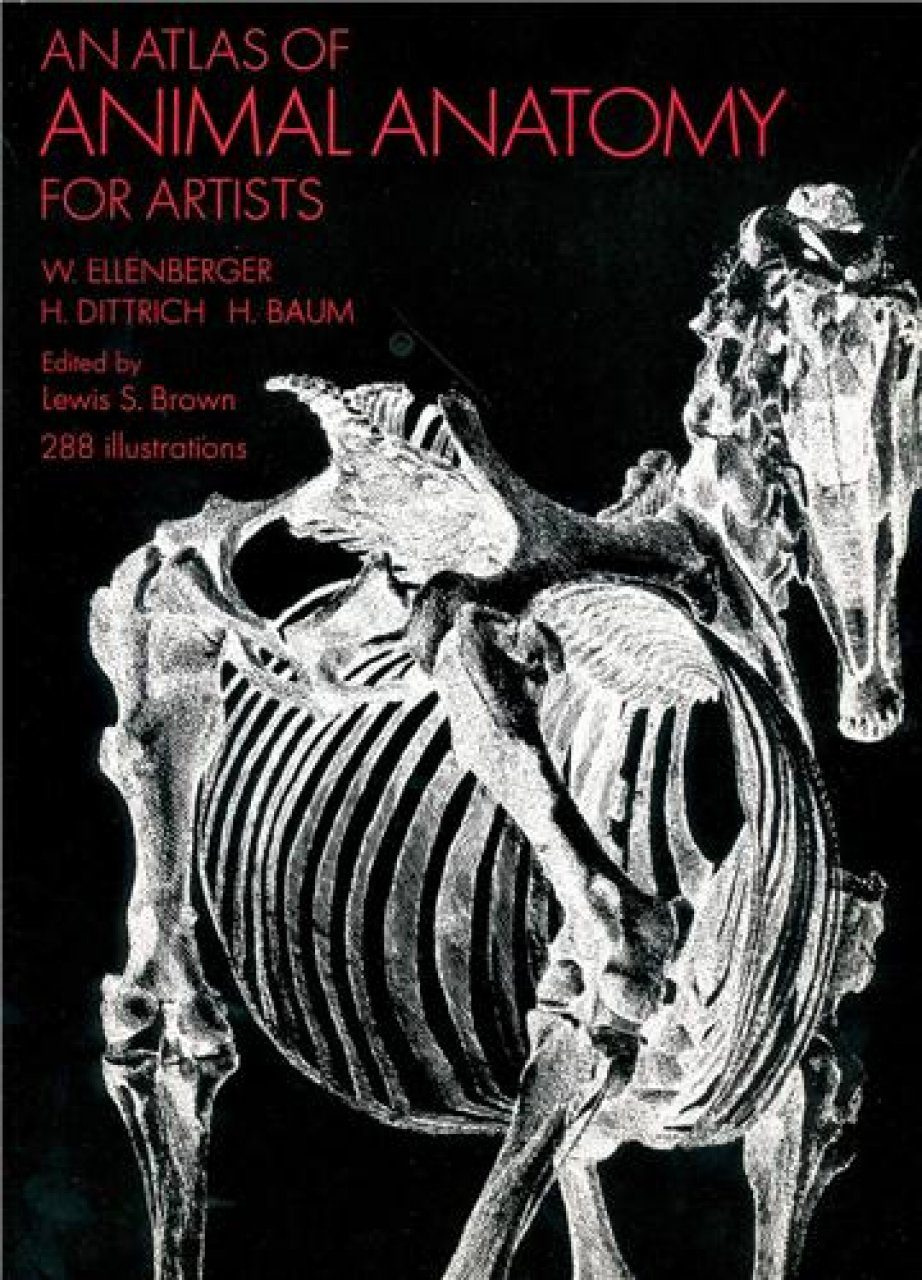 An Atlas Of Animal Anatomy For Artists W Ellenberger H Dittrich H
