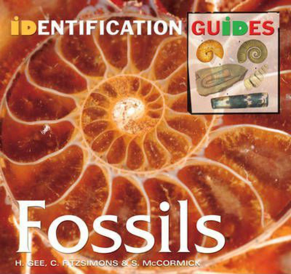 Fossils: Identification Guide