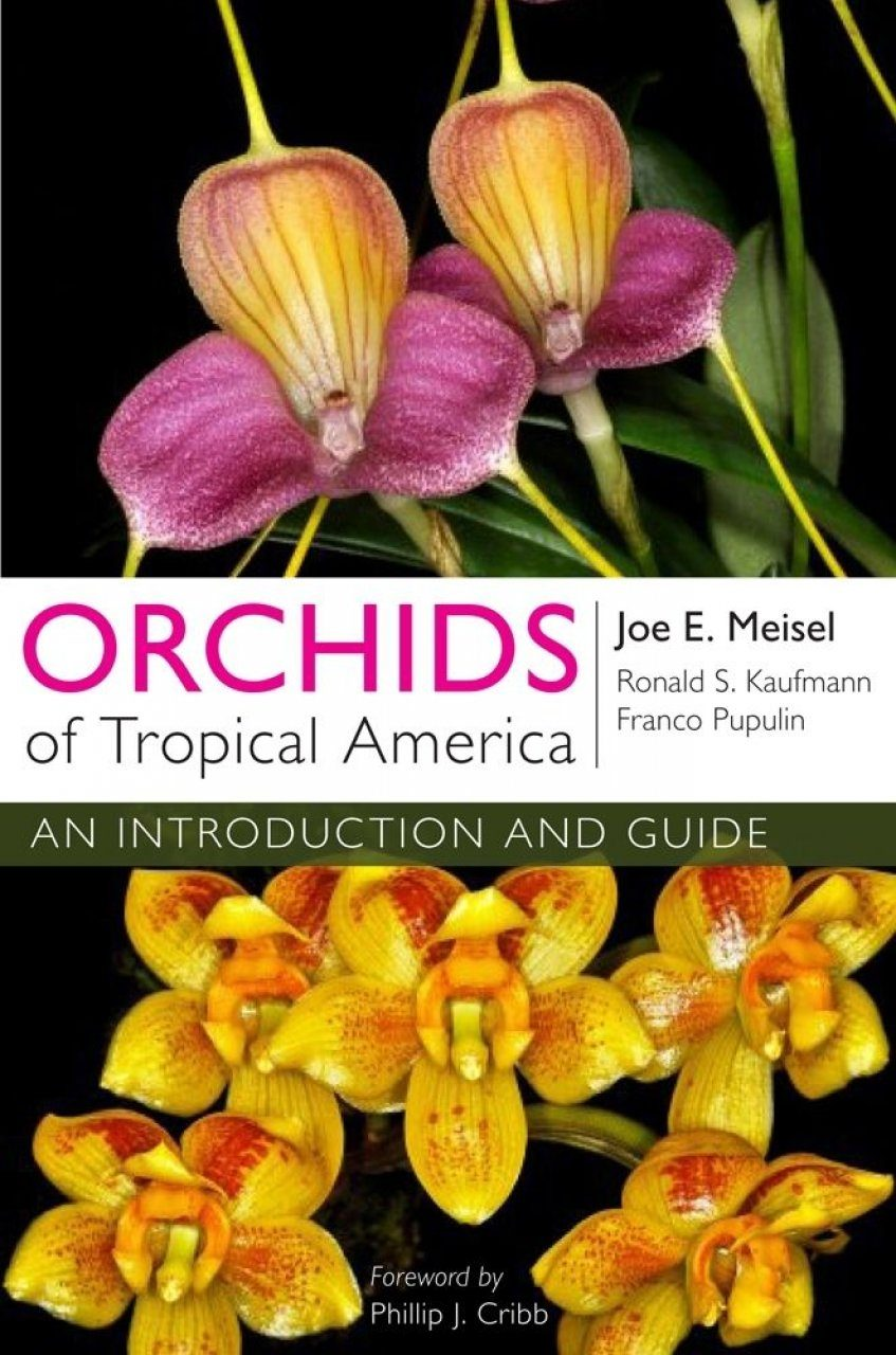 Orchids of Tropical America