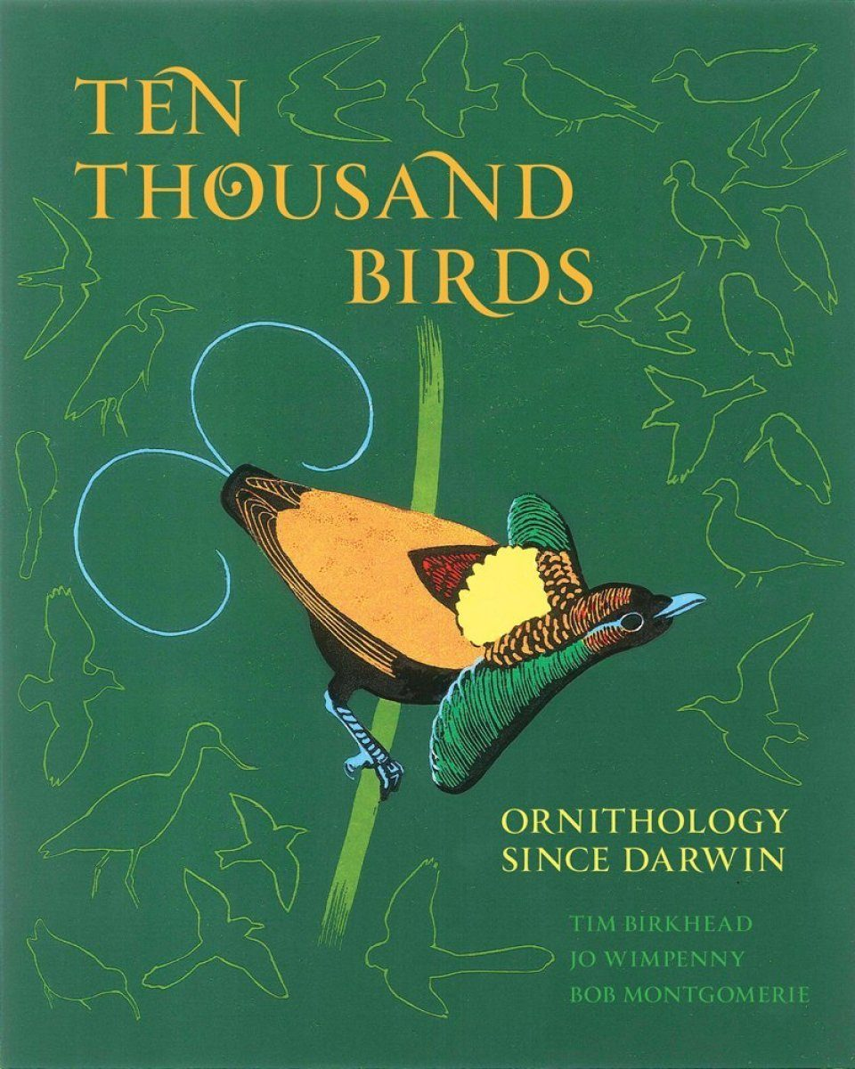 Ten Thousand Birds