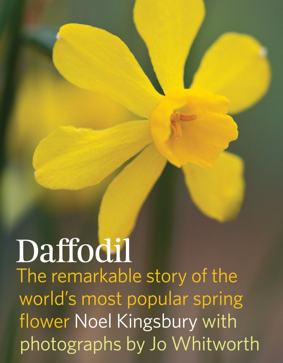 Daffodil: The Remarkable Story of the World's Most Popular Spring Flower