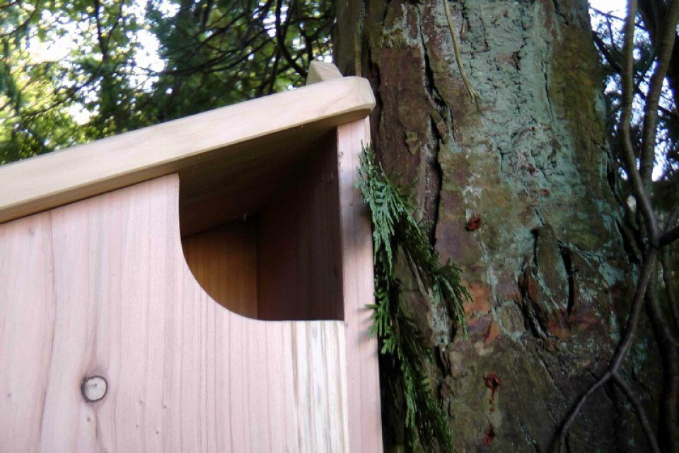 Red Squirrel Nest Box Nhbs Practical Conservation Equipment