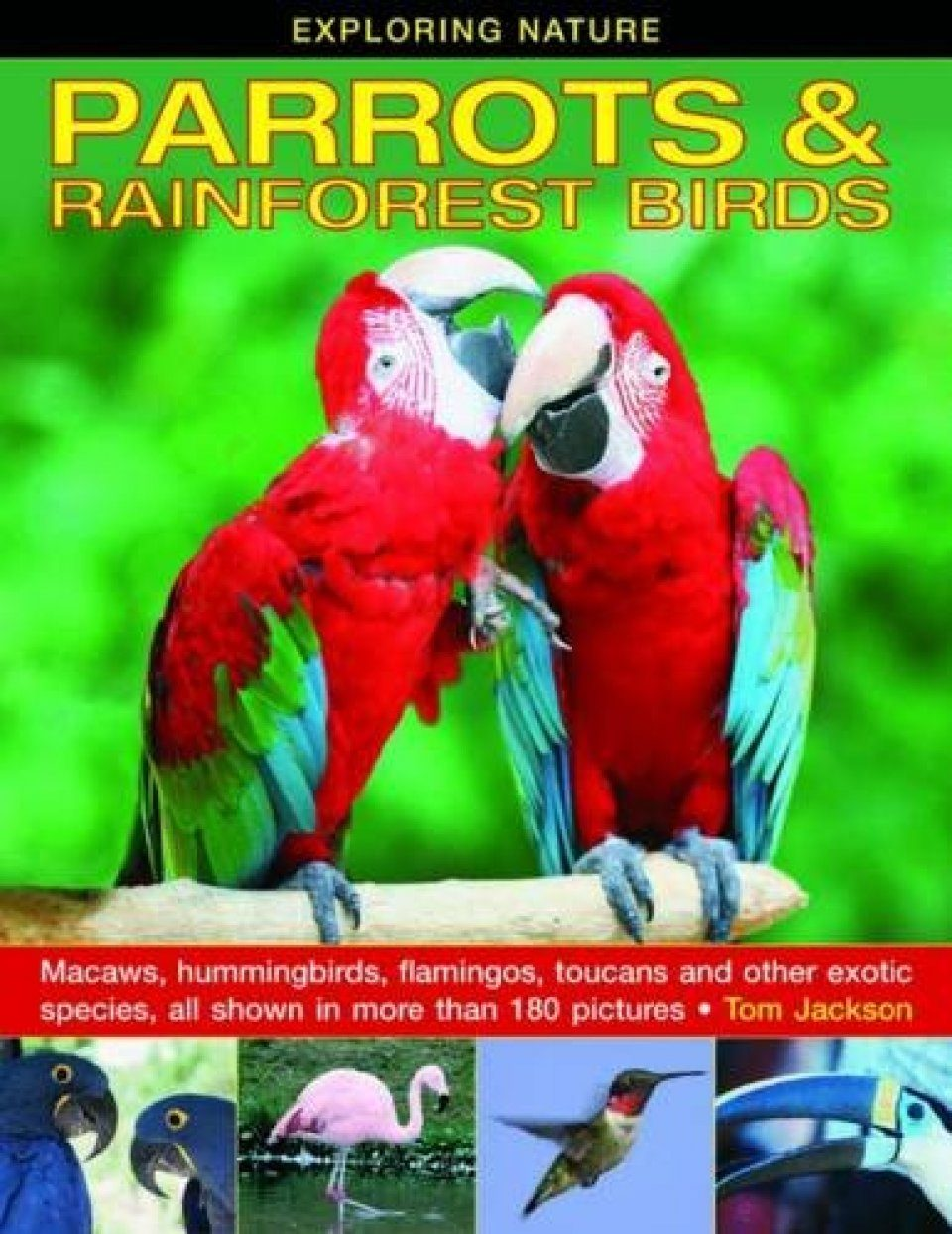 Parrots & Rainforest Birds