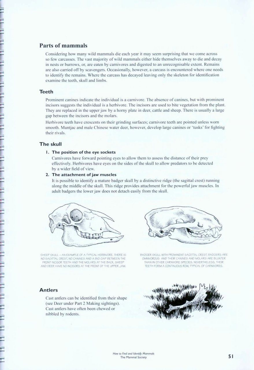 How To Find And Identify Mammals Revised Edition Gillie