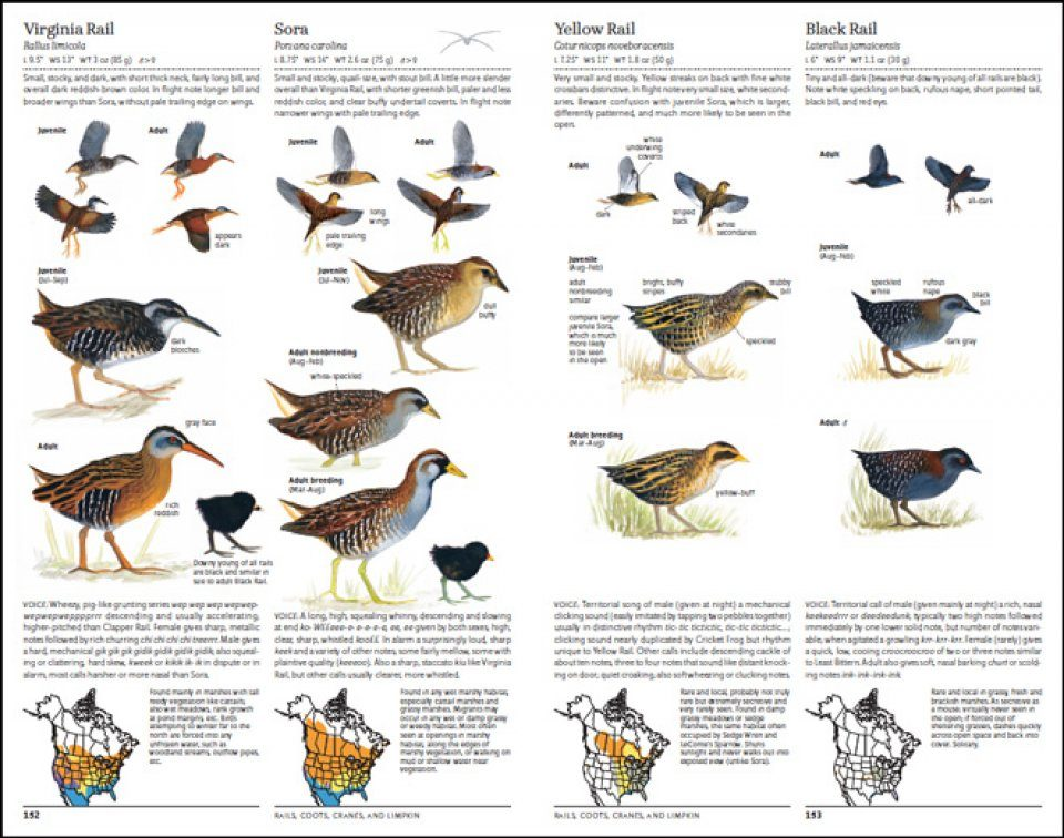The North American Bird Guide | NHBS Field Guides & Natural History