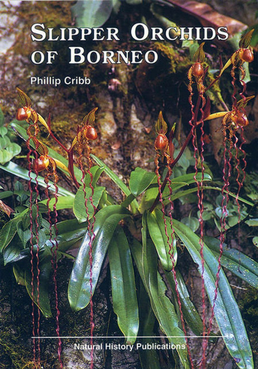 Slipper Orchids of Borneo