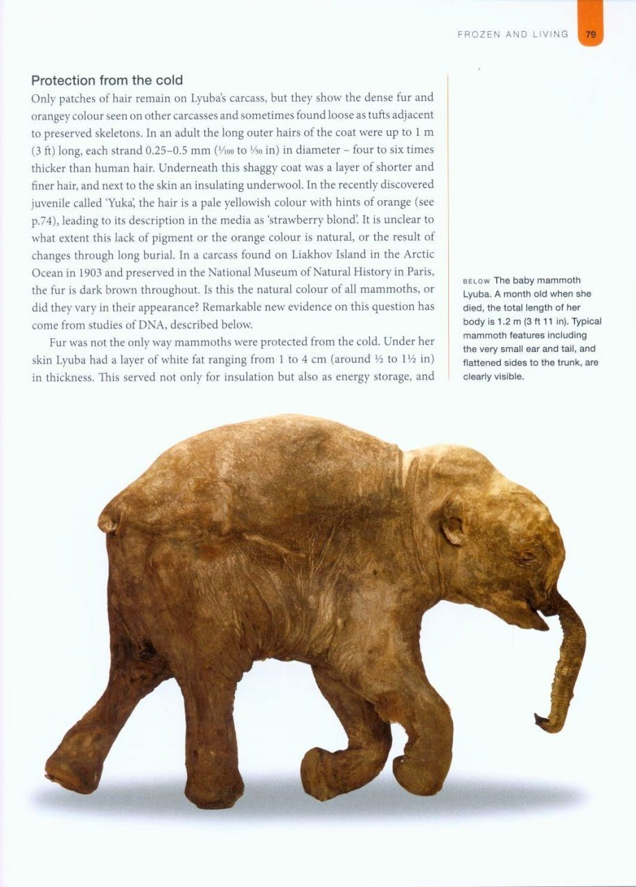 Mammoths: Ice Age Giants: Adrian Lister | NHBS Book Shop