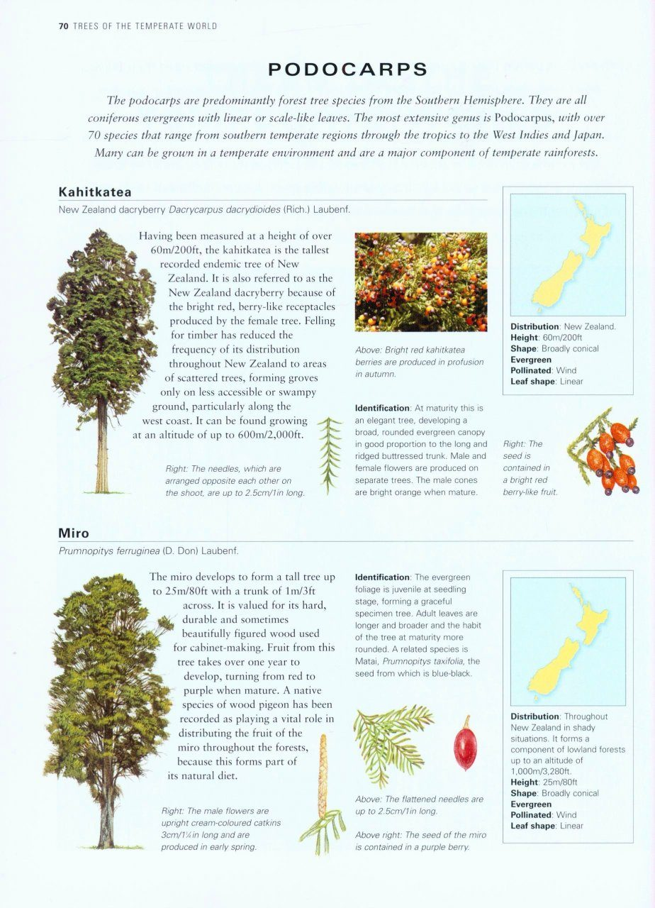 Trees An Illustrated Identifier And Encyclopedia Nhbs