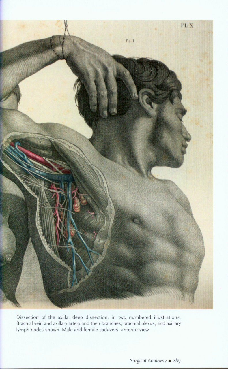 Human Anatomy Depicting The Body From The Renaissance To Today
