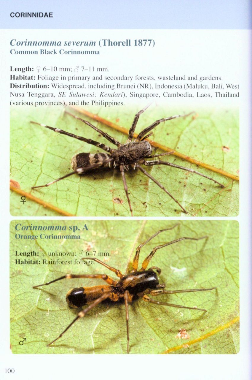 Spiders Of Borneo  With Special Reference To Brunei