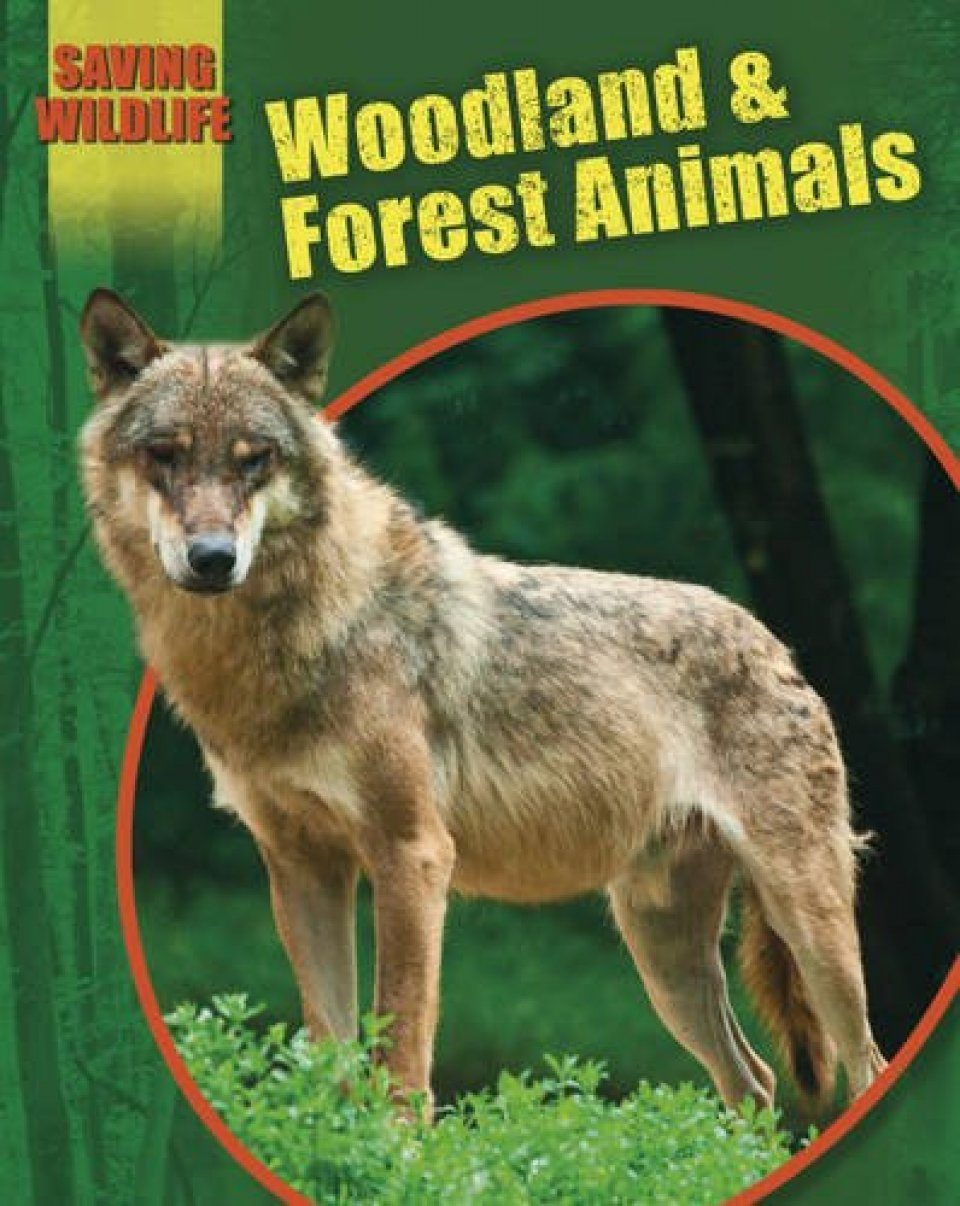 Saving Wildlife: Woodland and Forest Animals