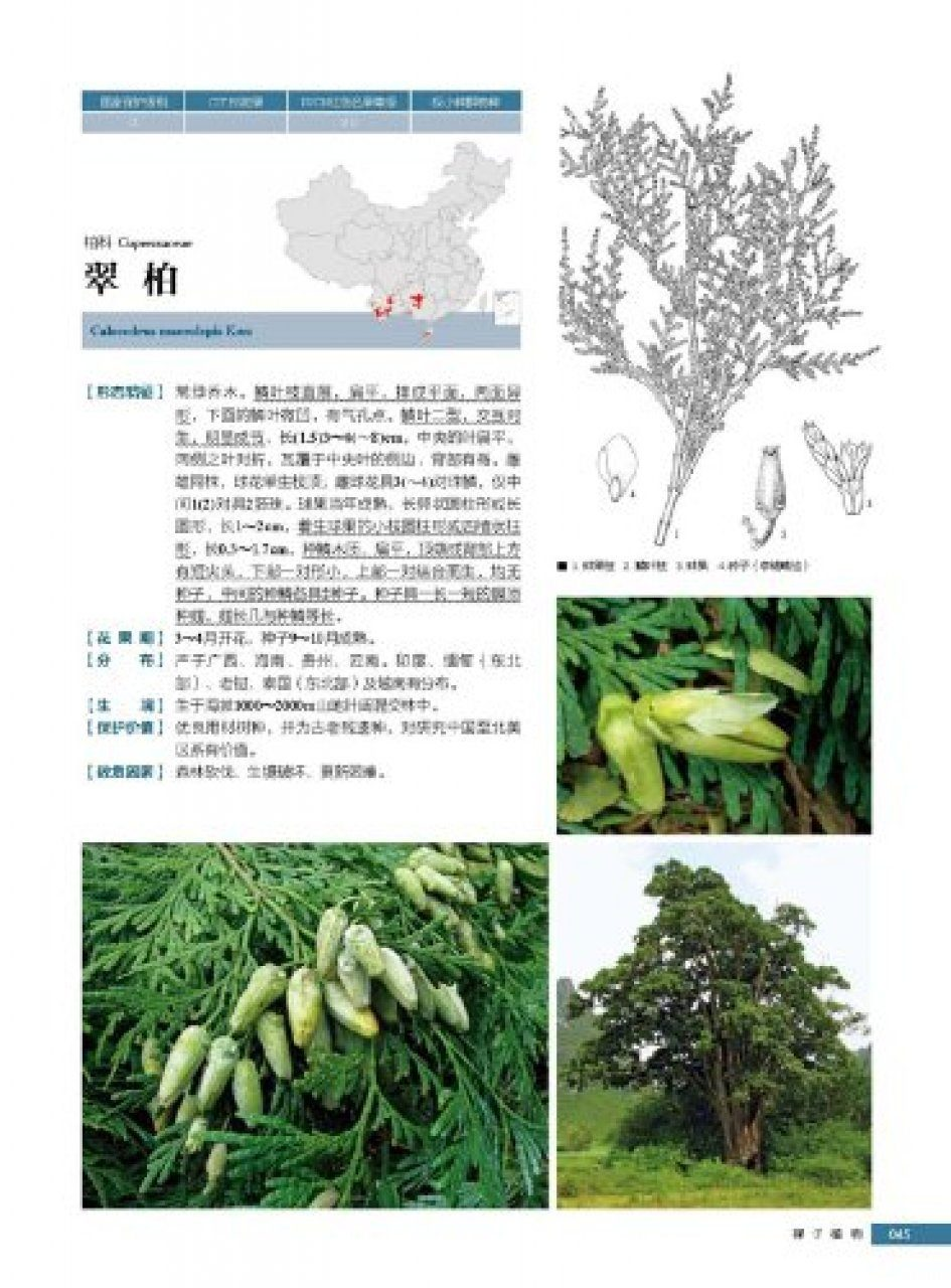 Rare And Endangered Plants In China Chinese State