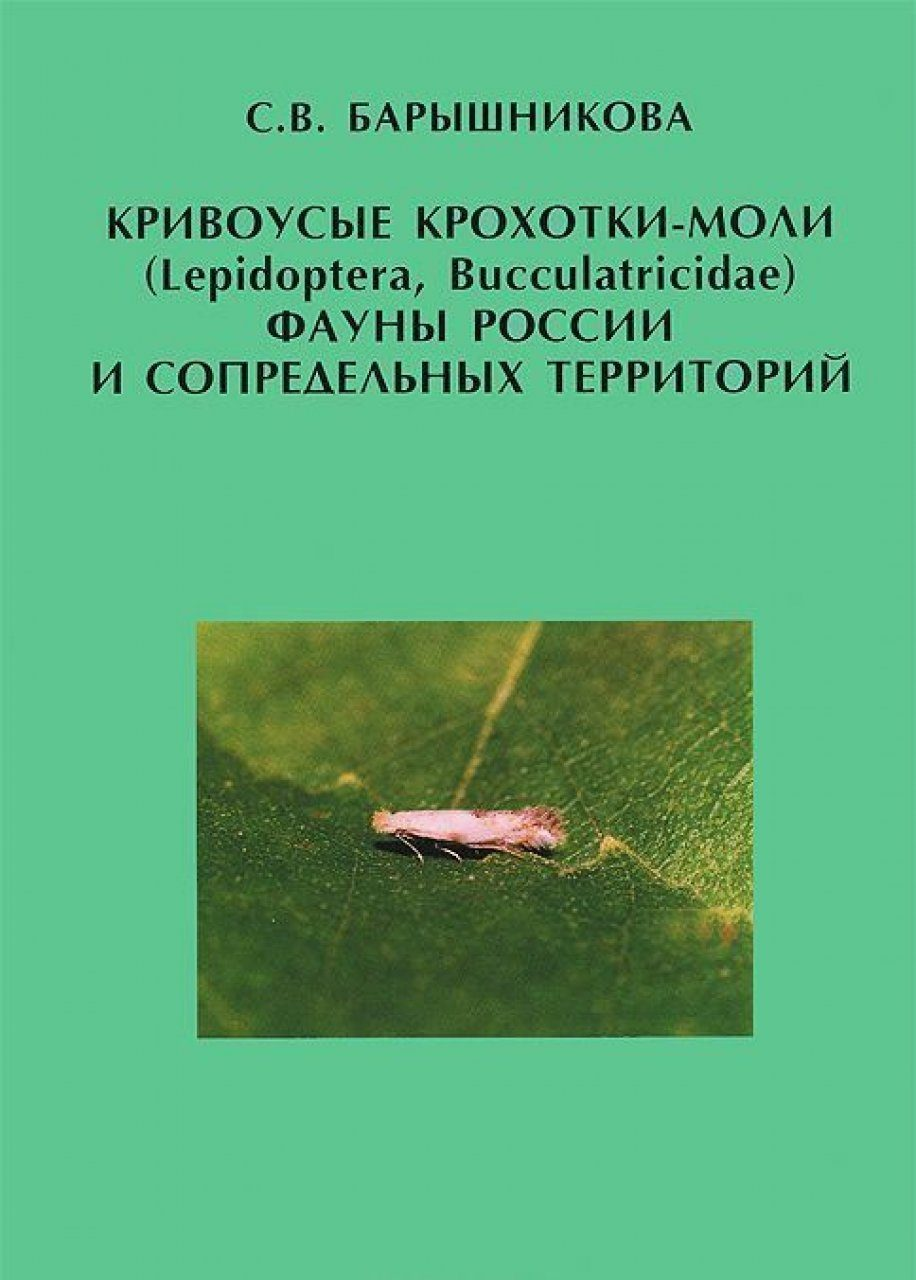 Krivousye Krokhotki-Moli (Lepidoptera, Bucculatricidae) Fauny Rossii i Sopredel'nykh Territorii [Bucculatricid moths (Lepidoptera, Bucculatricidae) of the Fauna of Russia and Adjacent Territories]